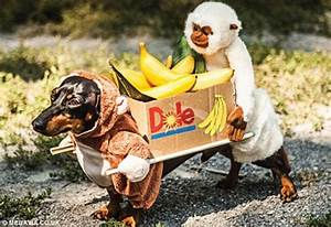 Crusoe the Dachshund becomes internet celebrity with his wacky outfits   Daily Mail Online