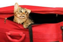 how to travel with a cat traveling with cats by car tips and tricks