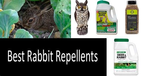 top 10 best rabbit repellents and deterrents expert review 2019
