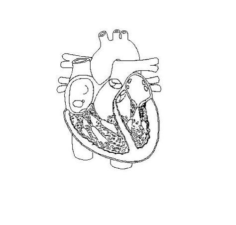 blank heart diagram   clip art