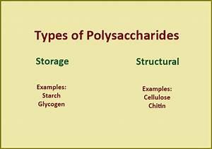 Polysaccharides Examples | www.pixshark.com - Images ...
