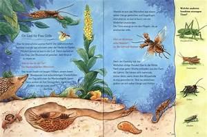 Kleine Fliegen In Der Erde : der kleine maulwurf und die tiere unter der erde von friederun reichenstetter hans g nther ~ Frokenaadalensverden.com Haus und Dekorationen