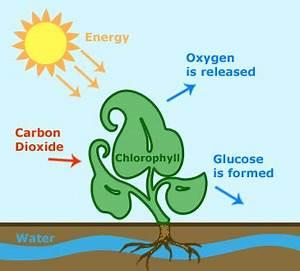 photosynthesis (lesson 0424) - TQA explorer