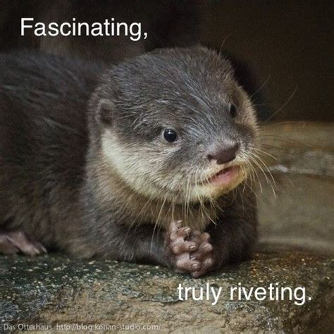 Funny Otter Meme - 25 best ideas about otter meme on pinterest otters funny images of adele and stupid memes