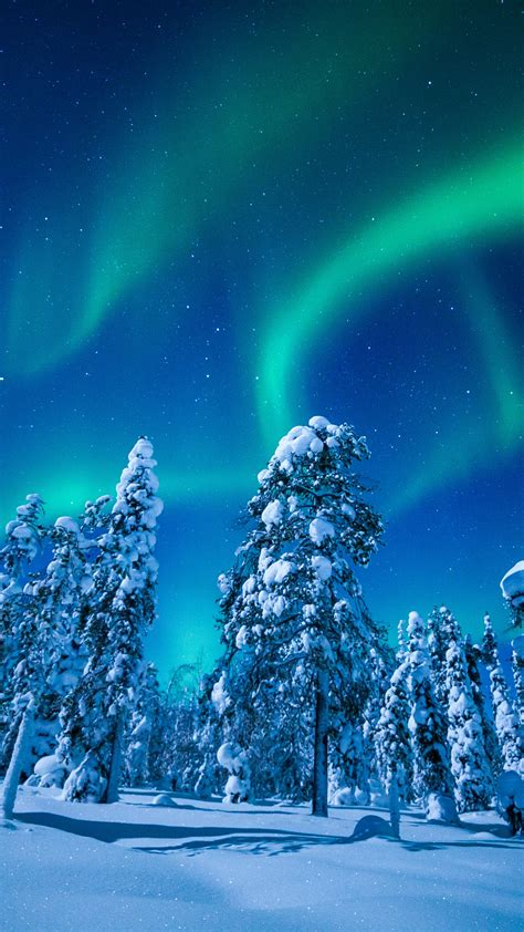 wallpaper lapland finland winter snow tree night