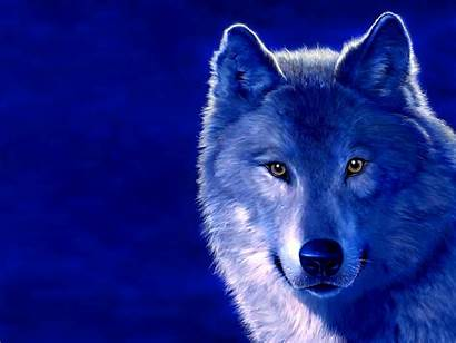Wolf Eyes Night Beast Animals Beasts Wallpapers