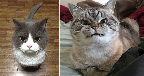 Adorably Angry Cats That Have Had Enough Of The World