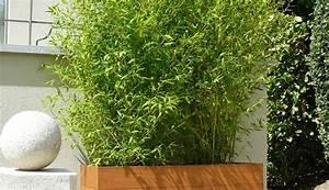 exemples de realisations en bambous pour exterieur With bac pour bambou terrasse
