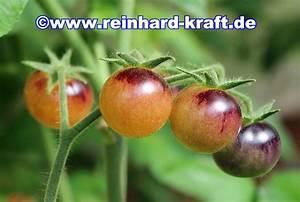 Tomaten Blätter Gelb : mein tomatenanbau ~ Frokenaadalensverden.com Haus und Dekorationen