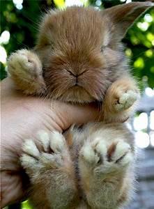 Funny Animals: Cute funny animals