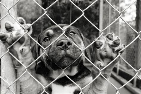 puppy mill facts wagbrag pet wellness health rescue