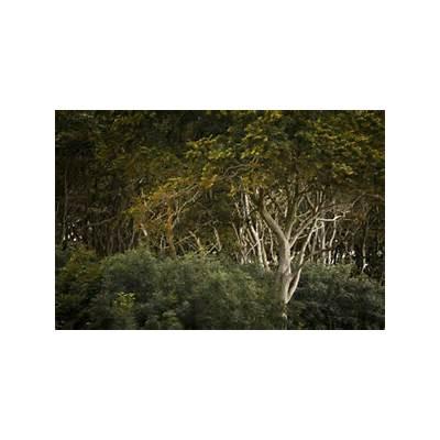 Beech forest ghost / Nienhagen Mecklenburg