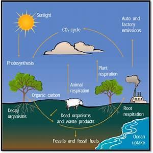 Printables. Carbon Cycle Worksheet. Beyoncenetworth ...