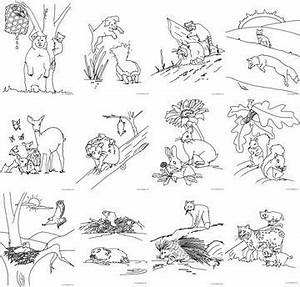 4 Best Images of Forest Animals Printable - Printable ...