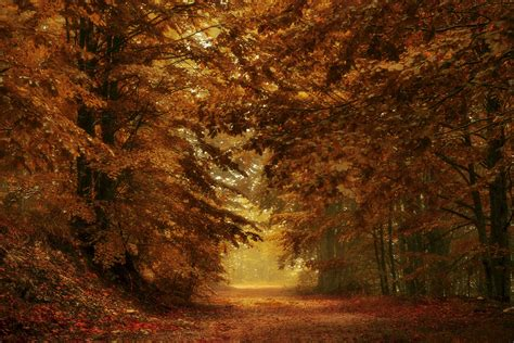 fall wallpapers top   fall backgrounds