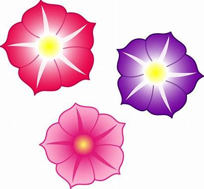 Flowers Cartoon Pink Cliparts Petunia Clip Colorful