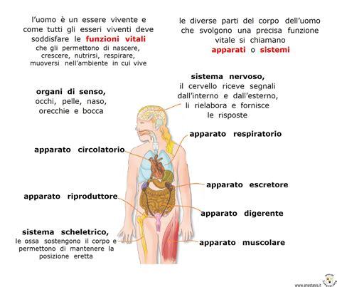 il corpo umano gli organi interni organi corpo umano immagini