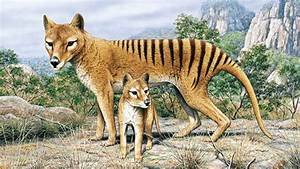 extinct animals found today | 10 Extinct Animals Alleged ...