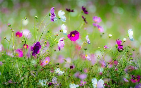 Beautiful Spring Flowers Hd Wallpaper  Download Hd
