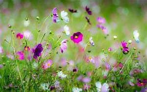 Beautiful Spring Flowers Background Pictures to Pin on ...