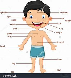 Parts Of The Human Body Clipart