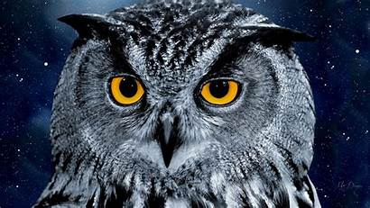 Owl Night Wallpapers Backgrounds Freecreatives Psd
