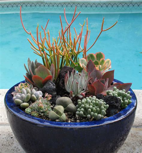 how to care for succulents in pots succulents red garden clogs