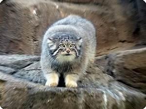 The Worlds Strangest & Rarest Animals