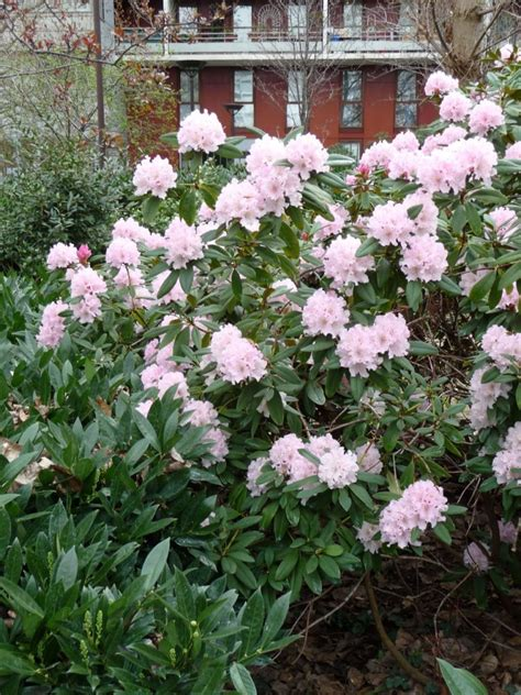 arbuste de terre de bruy 232 re paris c 244 t 233 jardin