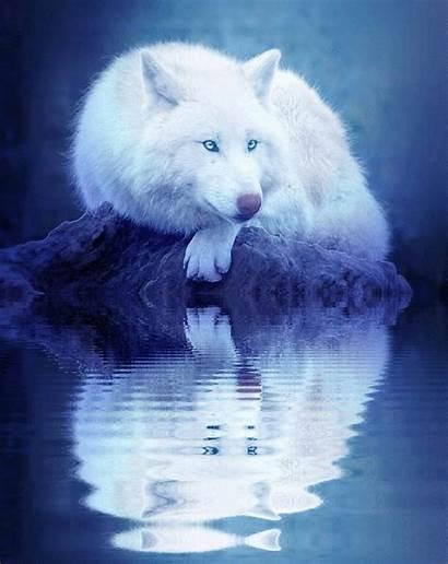 Wolf Spirit Eyes Animal Fox Animals Arctic