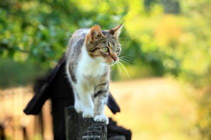 Keep Cats In Backyard by How To Keep Cats Out Of Your Yard