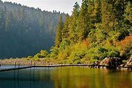 Jedediah Smith Redwoods State Park California