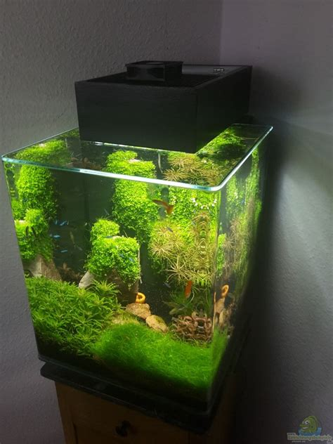 category aquascaping