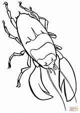 Lobster Coloring Drawing Printable Lobsters Drawings Crafts Paintingvalley Categories sketch template