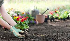 How To Make A Flower Bed And Start A Flower Garden