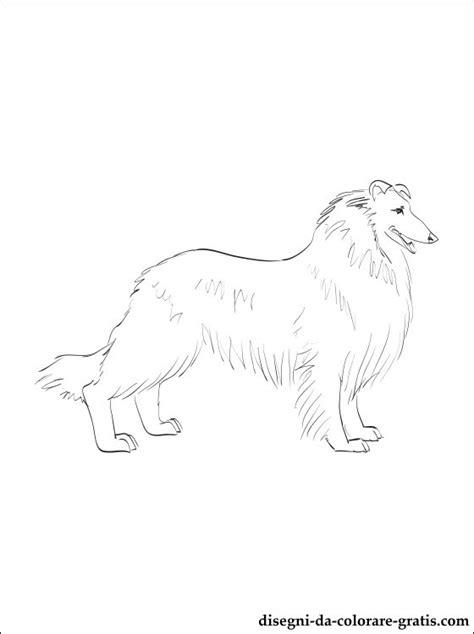 disegno  cane da pastore scozzese  pelo lungo da