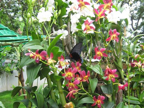 Orchideen In Meinem Garten Und Mittendrin Ein