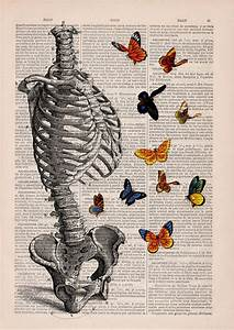 these anatomical drawings on book pages are so