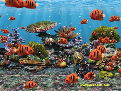 3d Animated Fish Wallpaper - moving fish wallpaper for desktop wallpapersafari