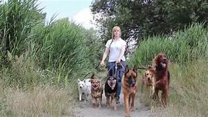 Professional dog walking service of a female service for Professional dog walking service