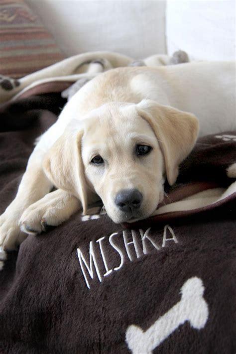 personalised dog blanket reversible brown cream