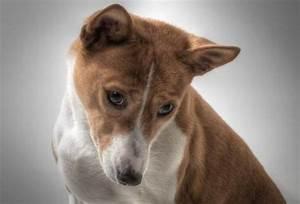 Enlever Odeur Urine Chien : comment enlever l 39 odeur d 39 urine de chien dans la maison ~ Nature-et-papiers.com Idées de Décoration