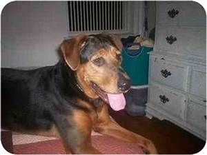 Sugar | Adopted Dog | Brooklyn, NY | Rottweiler/Black and ...