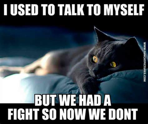 cat bipolar funny cats fight talk myself fun