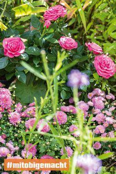 20 Unschlagbare Gartentipps Fuer Ueppige Bluetenpracht by Wundersch 246 N Die Rosane Petunie Oder Obi Pflanzen F 252 R