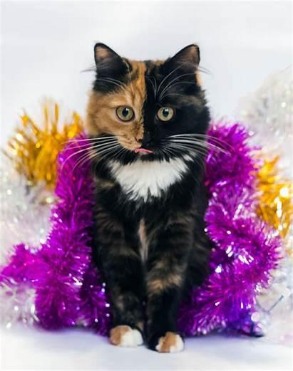 Cat Faced Kitten Faces Animals Tail