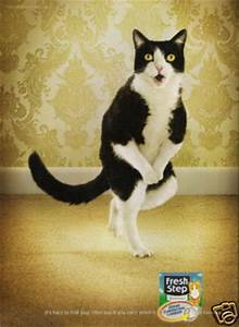 Post a Picture of The Funniest Cat You Can Find - Random ...