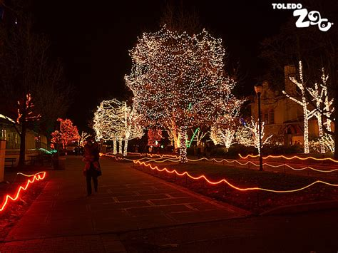 lights at the zoo an annual tradition in toledo ohio