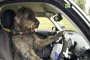 dogs that can drive a car you better believe it