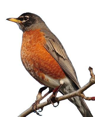 bird control for agriculture bird gard electronic bird